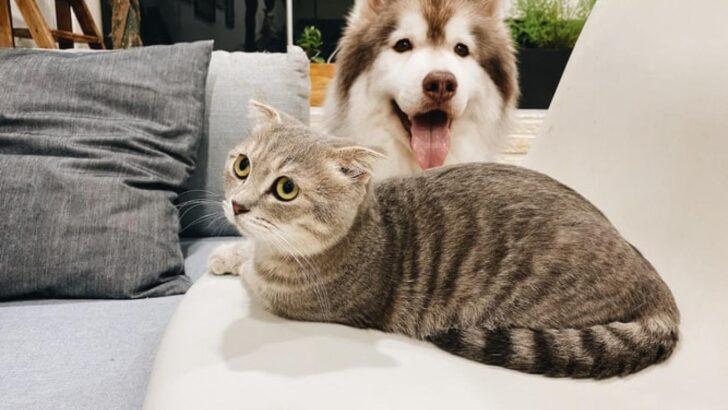 Corona Virüs kedi ve köpekleri nasıl etkiliyor?