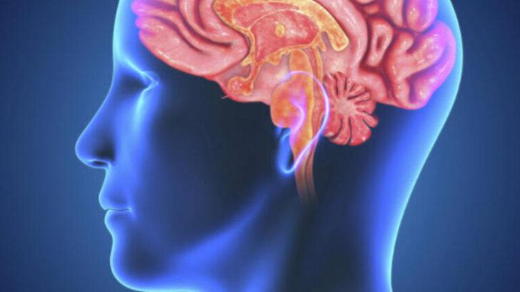 Alkol Tüketimi Hangi Yaş Aralığında Beynimize Ne Kadar Zarar Veriyor?