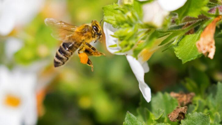 Arı Zehriyle Kanser Tedavisi
