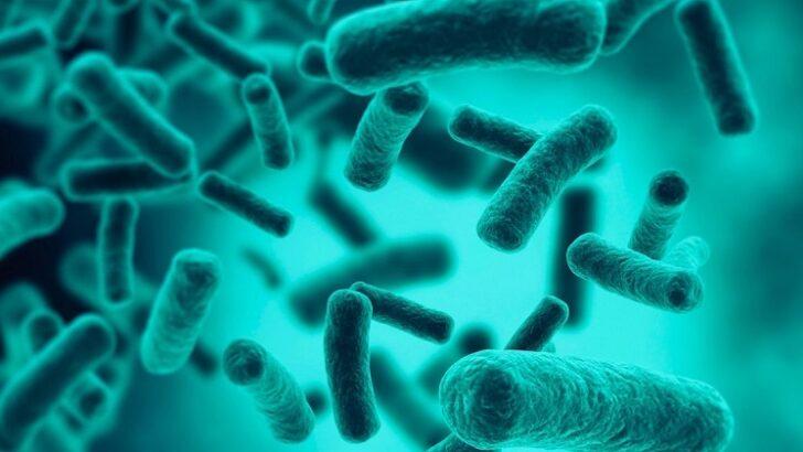 Bağırsak Mikrobiyom Analizi ile Kolon Kanseri Teşhisi