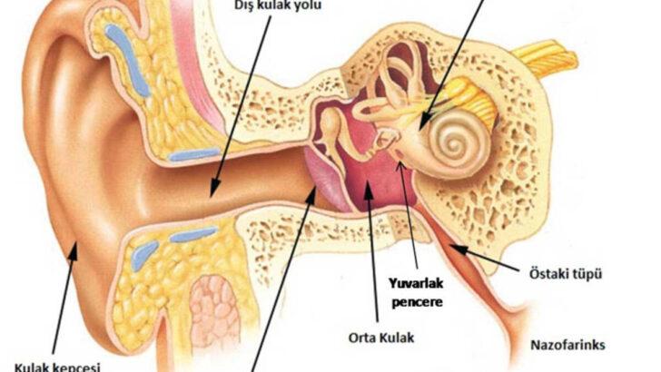 Kulak Zarı Delinmesi Neden Olur? Nasıl Tedavi Edilir?