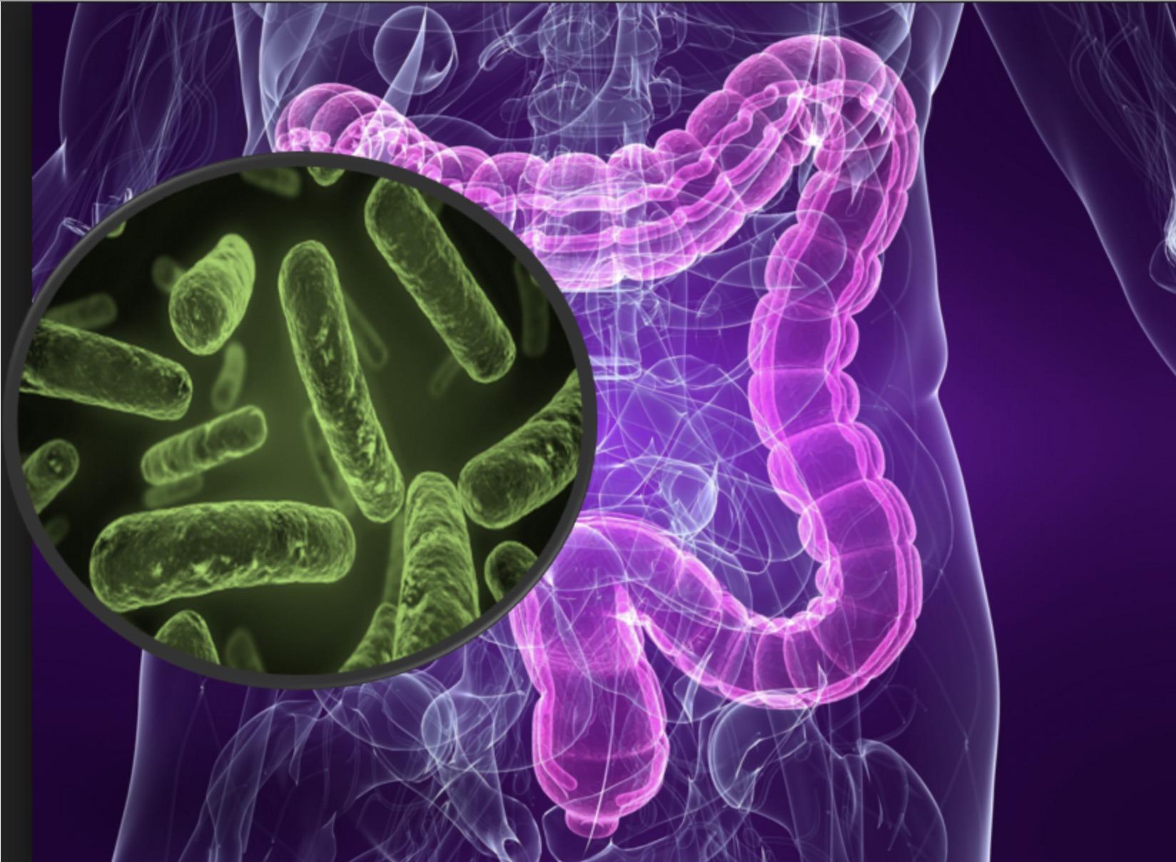 Sağlıklı Mikrobiyota Alzheimer Riskini Düşürüyor